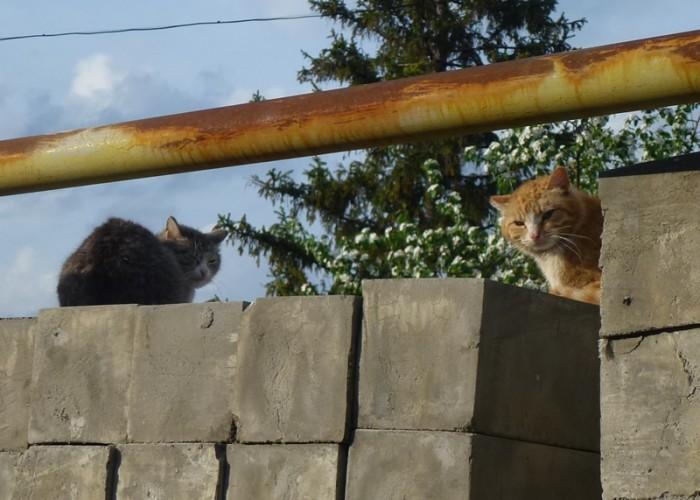 Cute-street-cats-00