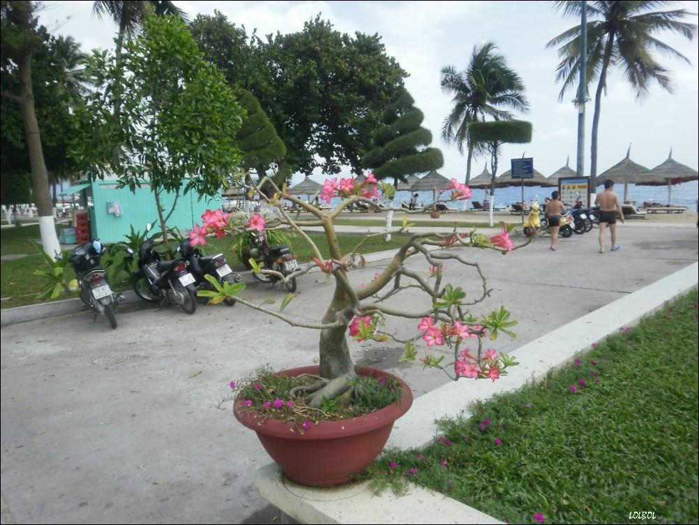 Vietnam-Nha-Trang-my-vacation-19
