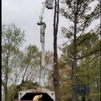 🌲Tree Removal Service & Land Clearing Services 🚜