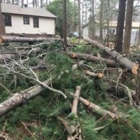 Tree Service Removal & Landscaping (Visa and Mastercard accepted) (Raleigh)