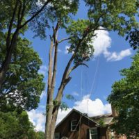 🌲Combo Contracting Tree Removal Service 🚜 Save💰 (Charlotte , Concord, Hunterville, Pineville, Rock Hill, UNC)